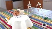 Хамстер като в ресторант, сервират му най - малкият дюнер приготвен за него