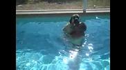 Гигантски 120-килограмов английски мастиф се учи да плува за първи път