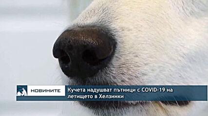 Кучета надушват пътници с COVID-19 на летището в Хелзинки