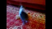 Коте срещу зайче