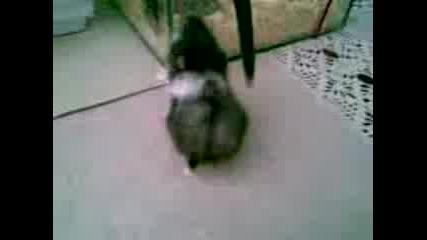 sladko hamster4e