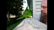 Много сладко папагалче повтаря собственика си