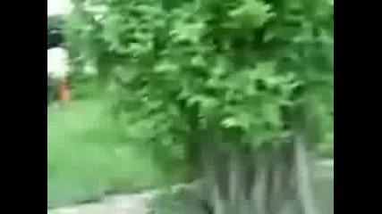 Ето Какво Правят Кучетата С Патките