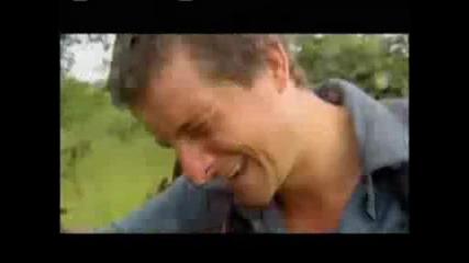 Bear Grylls - Mъж Яде Дървестни Ларви