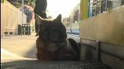 Котка , която чака стопанката си на Гарата!