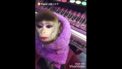 маймунка ...