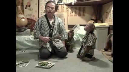 Забавна маймуна се храни по Японски