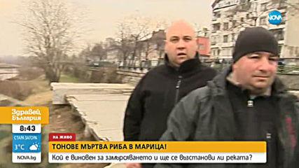 16 пъти е превишена нормата за неразтворени вещества в река Марица