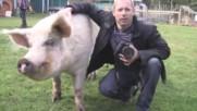 Провали с животни от фермата Януари 2017|| Failarmy
