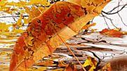 Довиждане лято , здравей есен !