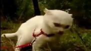 Тъпия поглед на 1 котка
