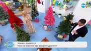 Йонко Земярски: Какви са новостите при коледните дръвчета? - На кафе (04.12.2020)