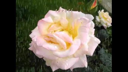 Дъжд И Рози
