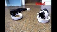 Смях- пияни котки