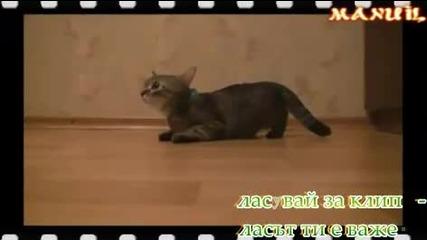 Това Диво Коте се Готви за Олимпийските игри ( смях ) !
