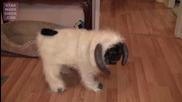 Куче облечено като овен - Смях
