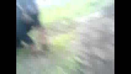 yagdterier poligon