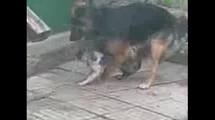 любов между куче и котка
