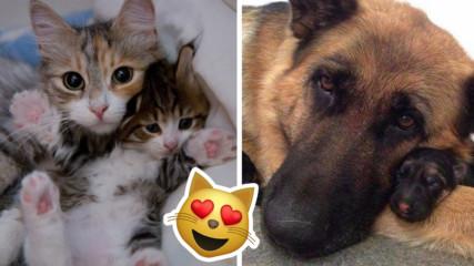 Нищо различно: 7 животни майки, които имат проблеми като човешките