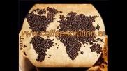 Кафе Салюшън_ Coffeesolution_идеалното кафе