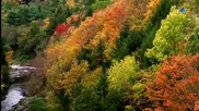The Autumn Soothing