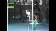 Коза И Маймуна Ходят По Въже