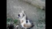 Най - сладичкото котенце на светааа!!!
