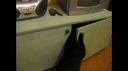 Коте Си Отваря Само Вратата