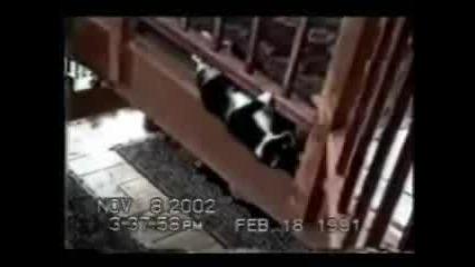 Забавни Котки - Мегаподборка