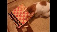 Котаракът - шахматист