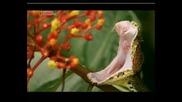 Най - Опасните Животни - Копиеглава Змия-КостаРика