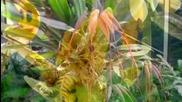 Орхидеята Кралицата на Цветята