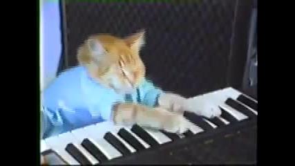 Котка свиреща на пиано!