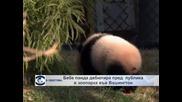 В обектива: Бебе панда за първи път пред публика във Вашингтон