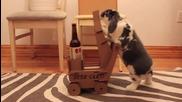 Сладък зайко носи бира на стопанина си