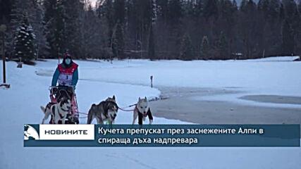 Кучета препускат през заснежените Алпи в спираща дъха надпревара