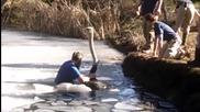 Мъж спасява щраус от замръзнала река!