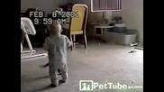 бебе се бие с котка