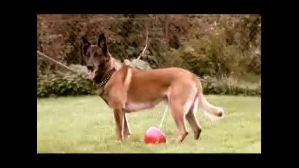 Куче водач
