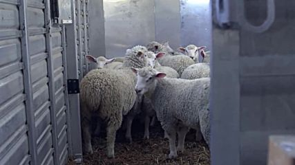 For All the Exploited Animals in the World This Year Was Worse Than Last Year but Will Be Better Tha