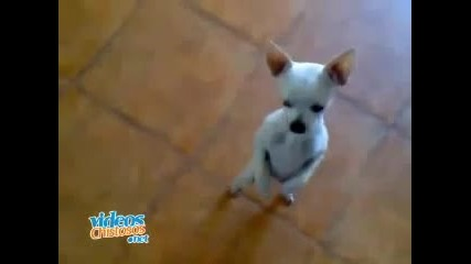 Куче танцува на Danza Kuduro - Голям смях