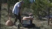 Отглеждане на пчели в примитивни кошери