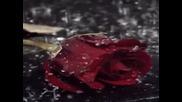 Seki Bihorac - Kroz veo ti vidim suze (hq) (bg sub)