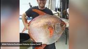 Топлокръвната лунна риба