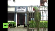 Папагала Хариял, псувал и ругал е задържан от полицията в индийския щат Махаращра