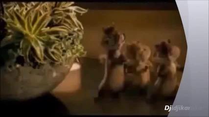 Chipmunks - djidjikanska