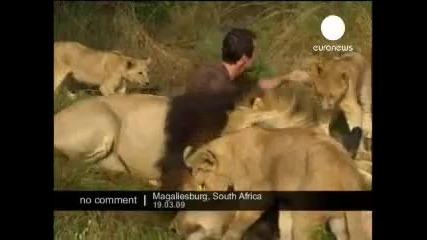 Лъвовете могат и Да Обичат хората {приятелство}