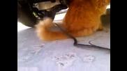 Весела котка срещу ядосана змия
