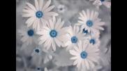 Море от красота, цветя и страхотна музика
