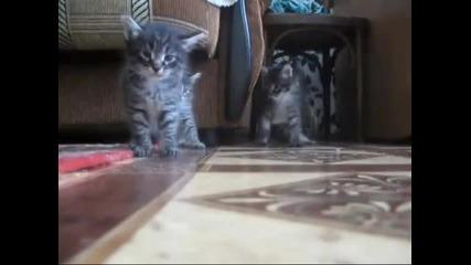 Челен сблъсък между две котета